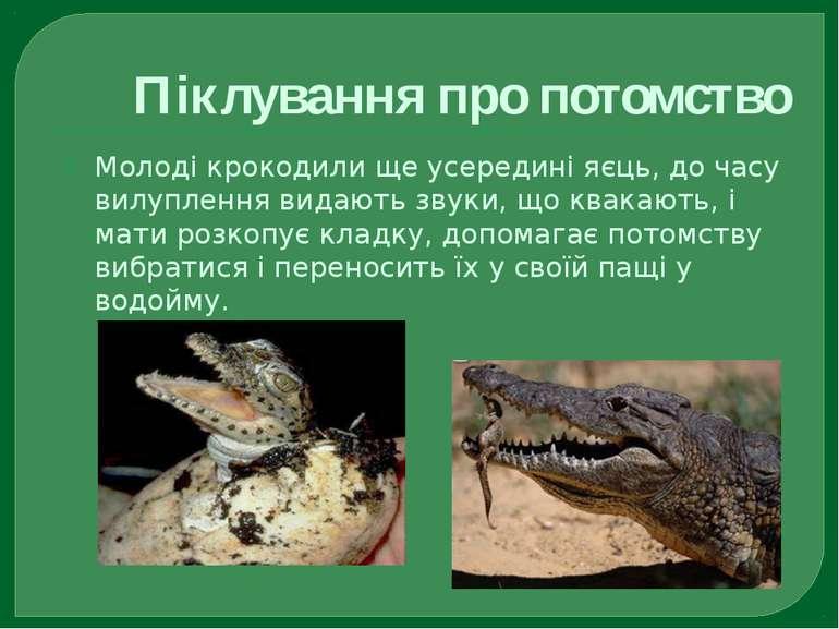 Піклування про потомство Молоді крокодили ще усередині яєць, до часу вилуплен...