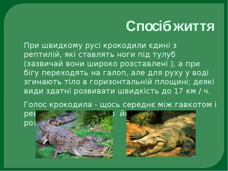 Спосіб життя При швидкому русі крокодили єдині з рептилій, які ставлять ноги ...