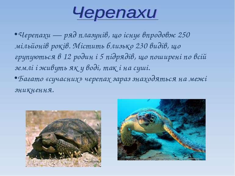 Черепахи — ряд плазунів, що існує впродовж 250 мільйонів років. Містить близь...