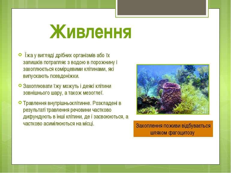 Їжа у вигляді дрібних організмів або їх залишків потрапляє з водою в порожнин...