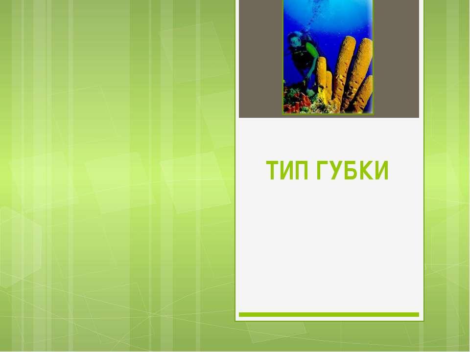 ТИП ГУБКИ