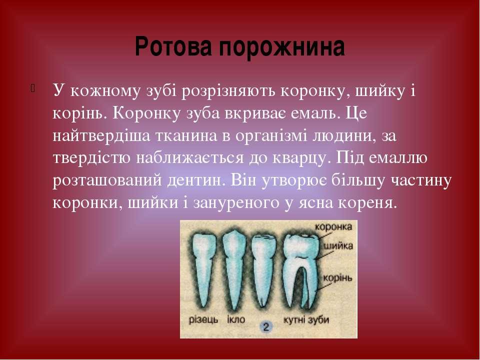 У кожному зубі розрізняють коронку, шийку і корінь. Коронку зуба вкриває емал...