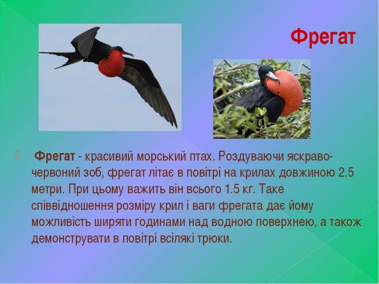 Фрегат Фрегат- красивий морський птах. Роздуваючи яскраво-червоний зоб, фре...