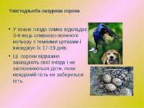 У кожне гніздо самка відкладає 3-8 яєць оливково-зеленого кольору з темними ц...