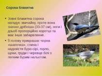 Зовніблакитнасорока нагадуєзвичайну,протевона значнодрібніша (33-37 см...