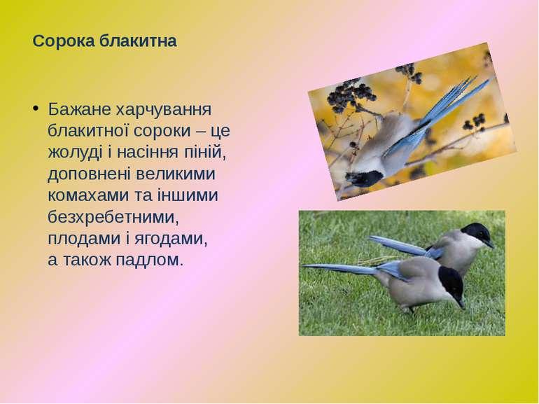 Бажанехарчування блакитної сороки – це жолудіінасінняпіній, доповнені вел...