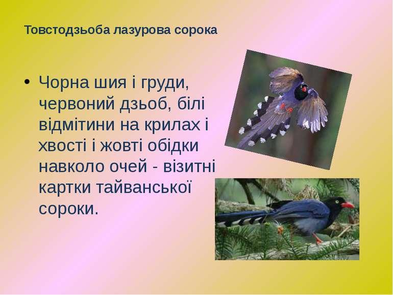 Чорна шия і груди, червоний дзьоб, білі відмітини на крилах і хвості і жовті ...