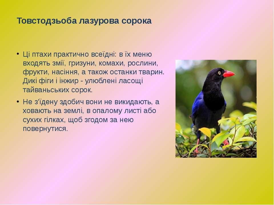 Ці птахи практично всеїдні: в їх меню входять змії, гризуни, комахи, рослини,...
