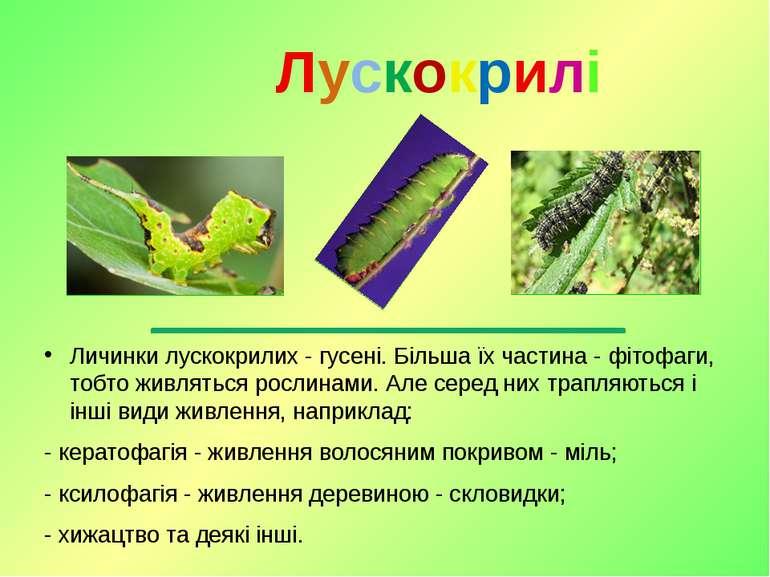 Личинкилускокрилих -гусені. Більша їх частина -фітофаги, тобто живляться р...