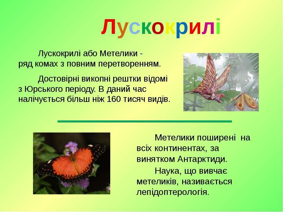 Лускокрилі або Метелики - рядкомахз повним перетворенням. Достовірнівикопн...