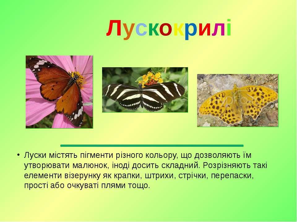 Луски містятьпігментирізного кольору, що дозволяють їм утворювати малюнок, ...