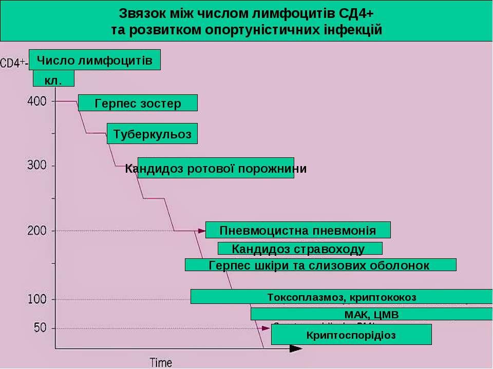 Звязок між числом лимфоцитів СД4+ та розвитком опортуністичних інфекцій Число...