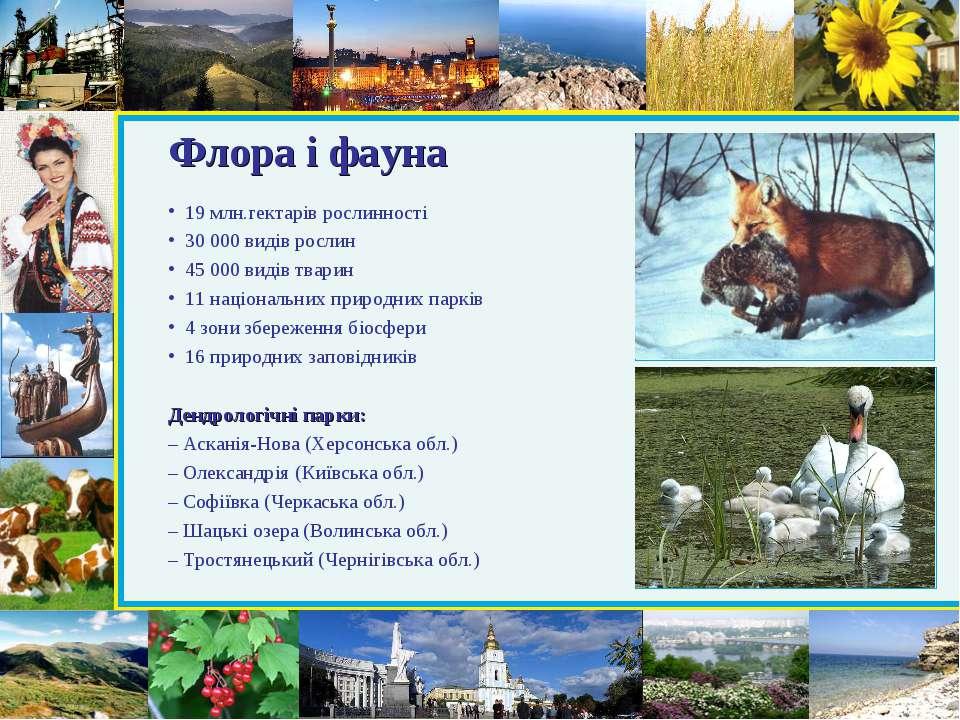 Флора і фауна 19 млн.гектарів рослинності 30 000 видів рослин 45 000 видів тв...