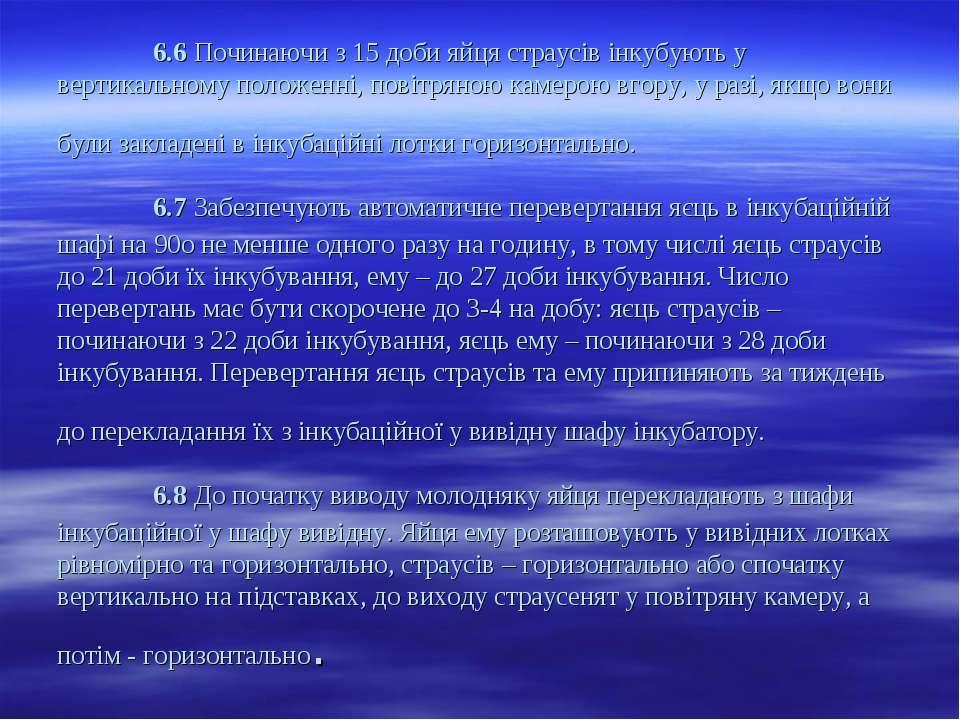 6.6 Починаючи з 15 доби яйця страусів інкубують у вертикальному положенні, по...