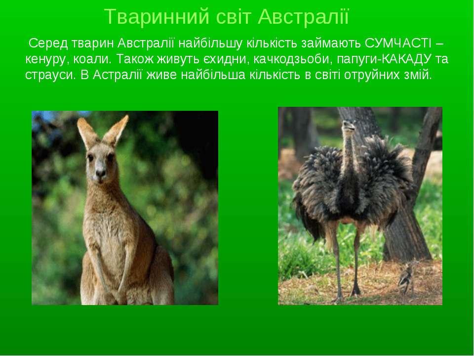 Серед тварин Австралії найбільшу кількість займають СУМЧАСТІ – кенуру, коали....