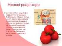 Нюхові рецептори