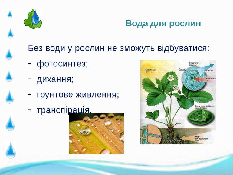 Без води у рослин не зможуть відбуватися: Без води у рослин не зможуть відбув...
