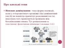 Неповне домінування- така форма взаємодії, коли у гетерозиготного організму ...