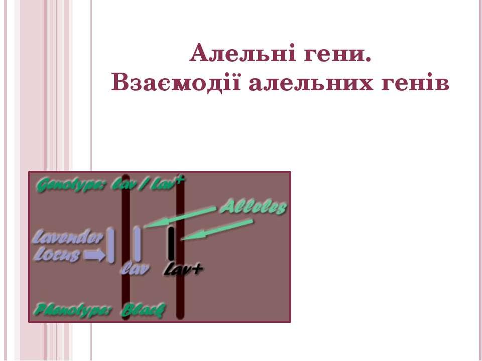 Алельні гени. Взаємодії алельних генів