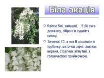 Квітки білі, запашні, 5-20 см в довжину, зібрані в суцвіття китиці. Тичинок 1...