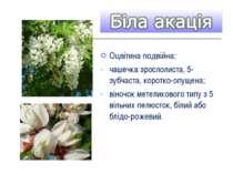 Оцвітина подвійна: чашечка зрослолиста, 5-зубчаста, коротко-опущена; віночок ...