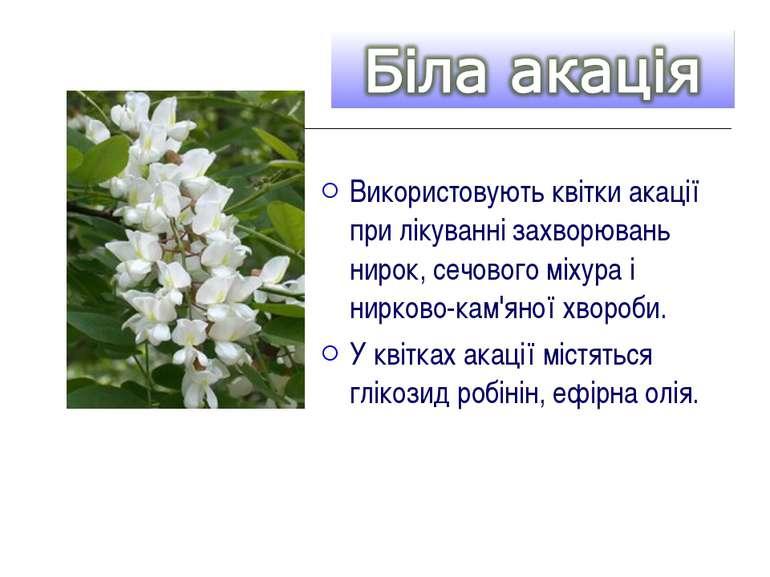 Використовують квітки акації при лікуванні захворювань нирок, сечового міхура...