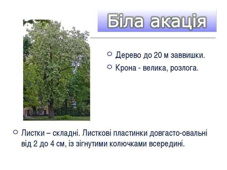 Дерево до 20 м заввишки. Крона - велика, розлога. Листки – складні. Листкові ...