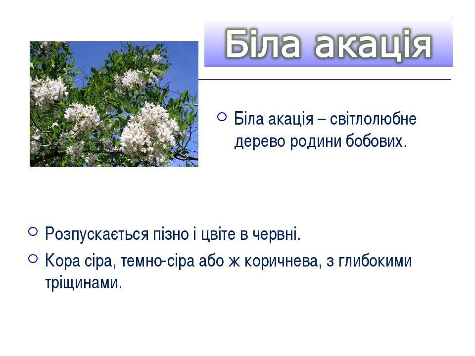 Розпускається пізно і цвіте в червні. Кора сіра, темно-сіра або ж коричнева, ...