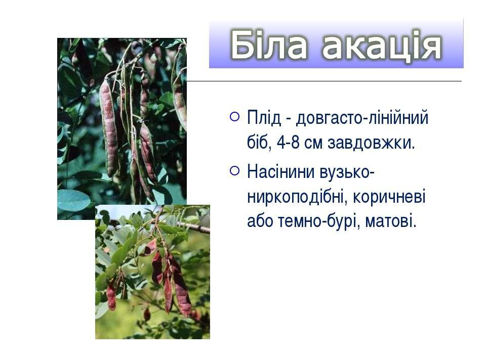 Плід - довгасто-лінійний біб, 4-8 см завдовжки. Насінини вузько-ниркоподібні,...