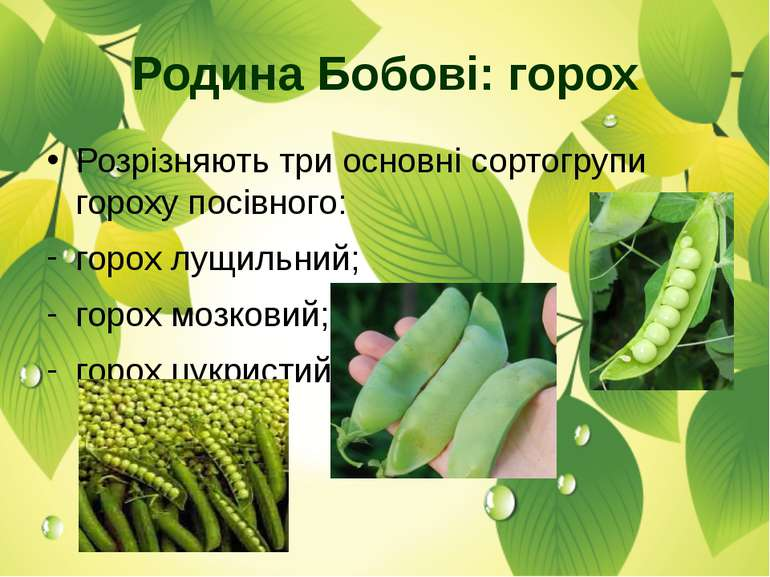 Розрізняють три основні сортогрупи гороху посівного: горох лущильний; горох м...