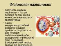 Вагітність людини поділяється на три періоди по три місяці кожен, які називаю...