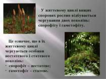У життєвому циклі Вищих спорових рослин