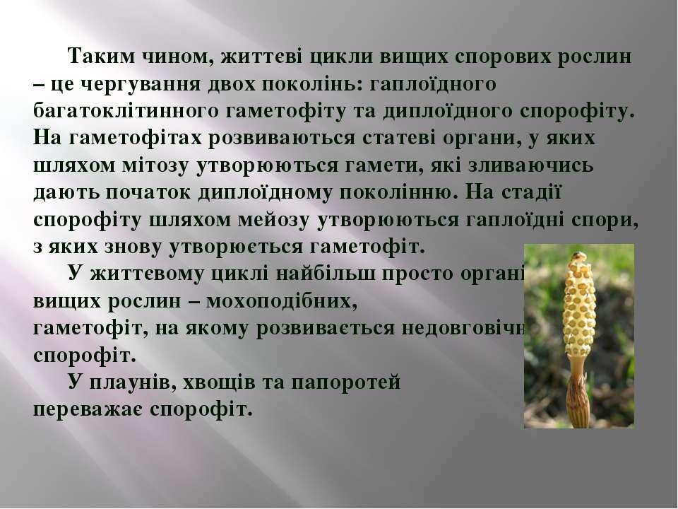 Таким чином, життєві цикли вищих спорових рослин
