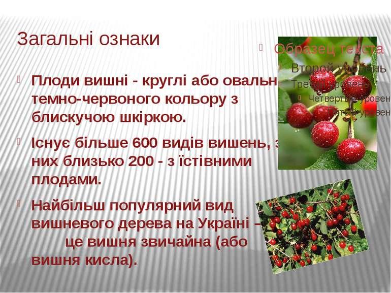 Загальні ознаки Плоди вишні-круглі або овальні темно-червоного кольору з бл...