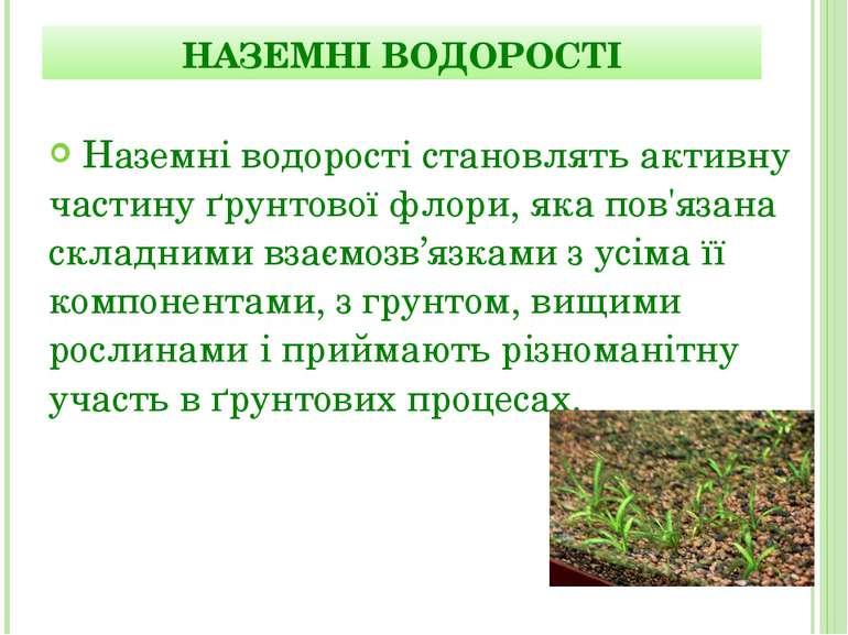 Наземні водорості становлять активну частину ґрунтової флори, яка пов'язана с...