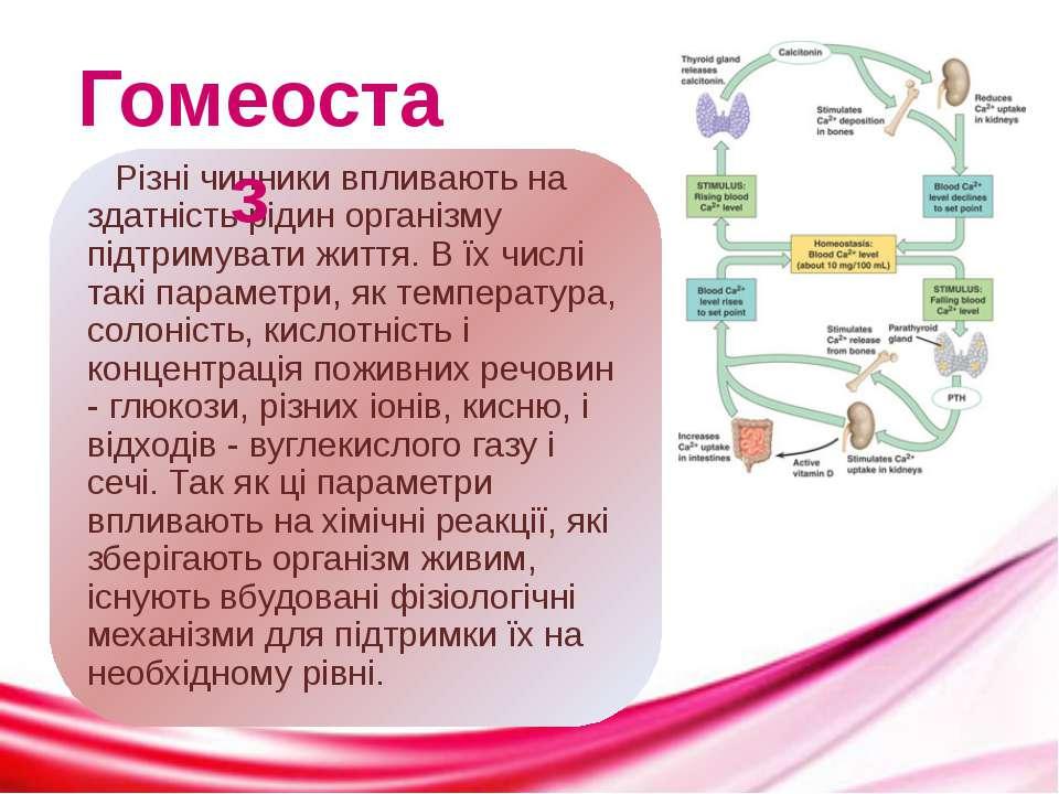 Гомеостаз