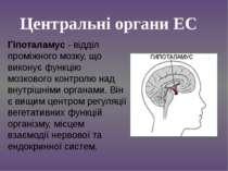 Гіпоталамус - відділ проміжного мозку, що виконує функцію мозкового контролю ...