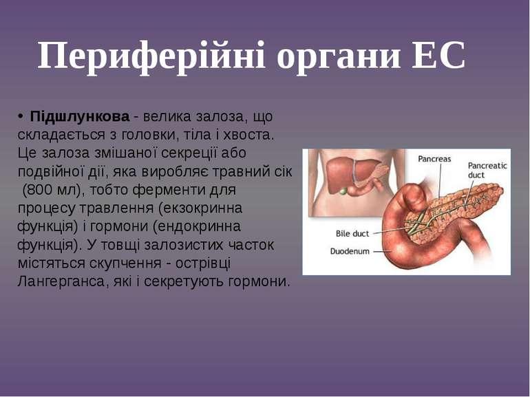 Підшлункова - велика залоза, що складається з головки, тіла і хвоста. Це зало...