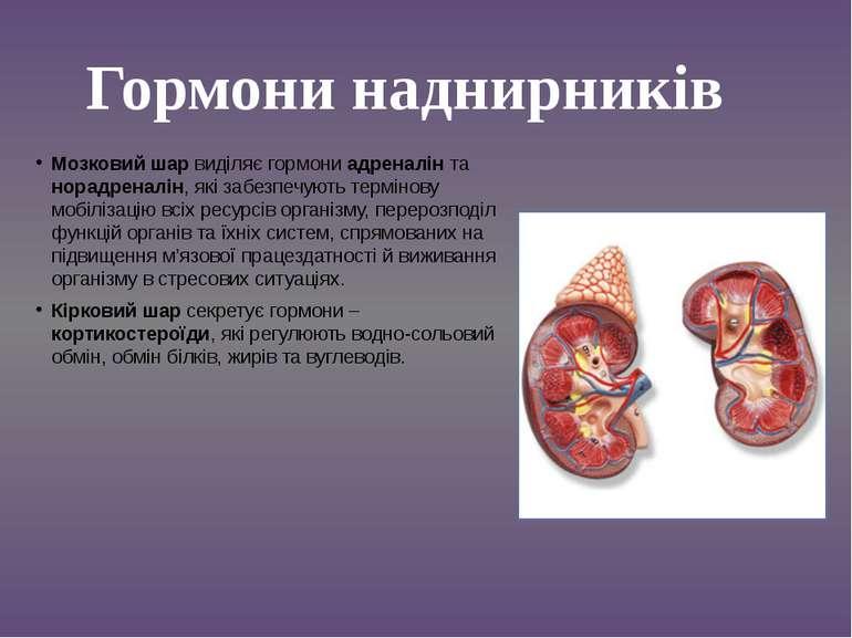 Мозковий шар виділяє гормони адреналін та норадреналін, які забезпечують терм...