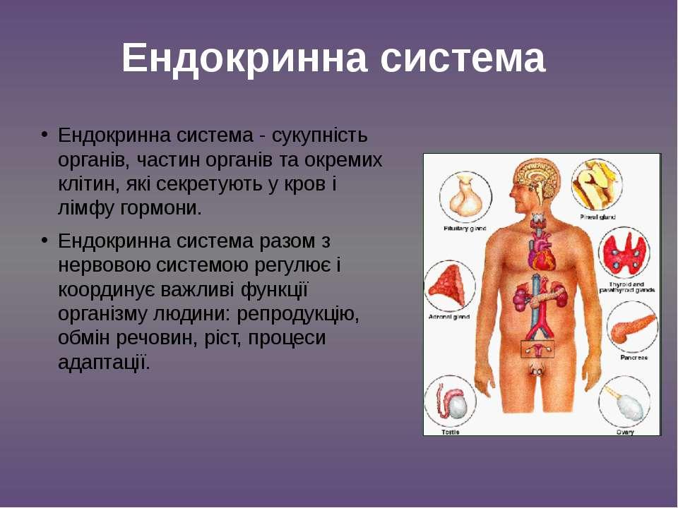 Ендокринна система - сукупність органів, частин органів та окремих клітин, як...