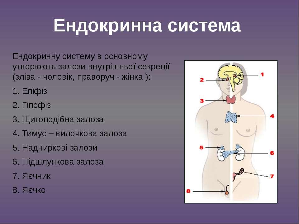 Ендокринну систему в основному утворюють залози внутрішньої секреції (зліва -...