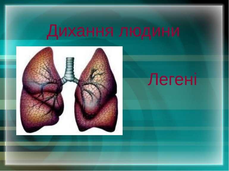 Дихання людини Легені