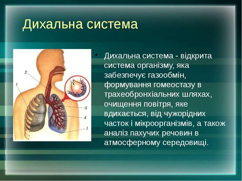 Дихальна система - відкрита система організму, яка забезпечує газообмін, форм...