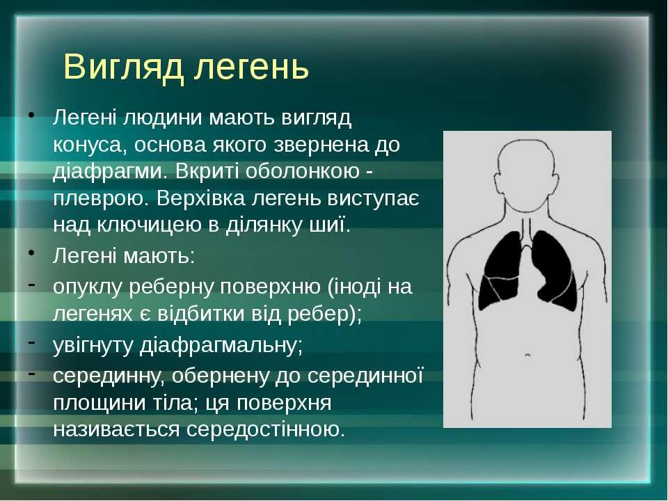 Вигляд легень Легені людини мають вигляд конуса, основа якого звернена до діа...