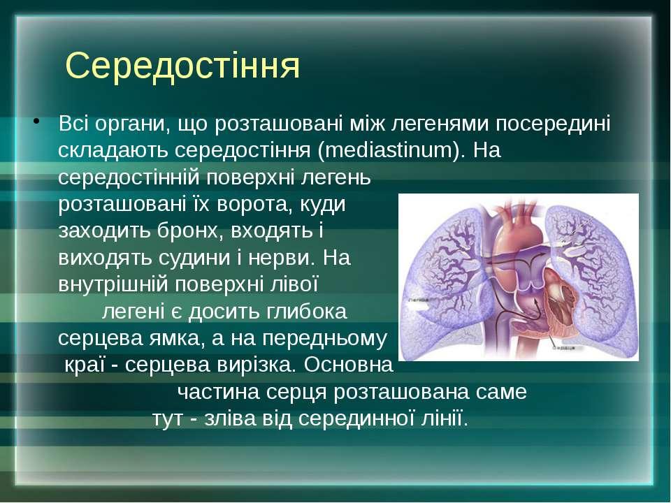 Середостіння Всі органи, що розташовані між легенями посередині складають сер...