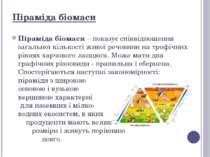 Піраміда біомаси – показує співвідношення загальної кількості живої речовини ...