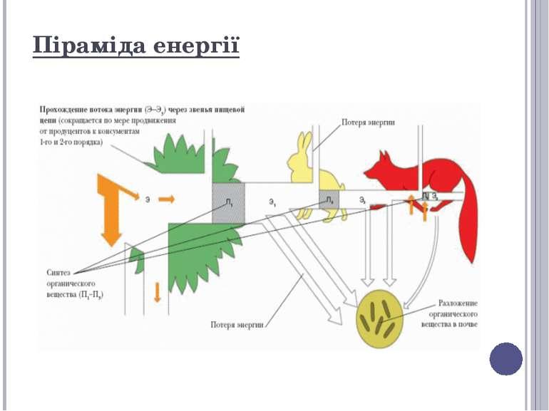 Піраміда енергії