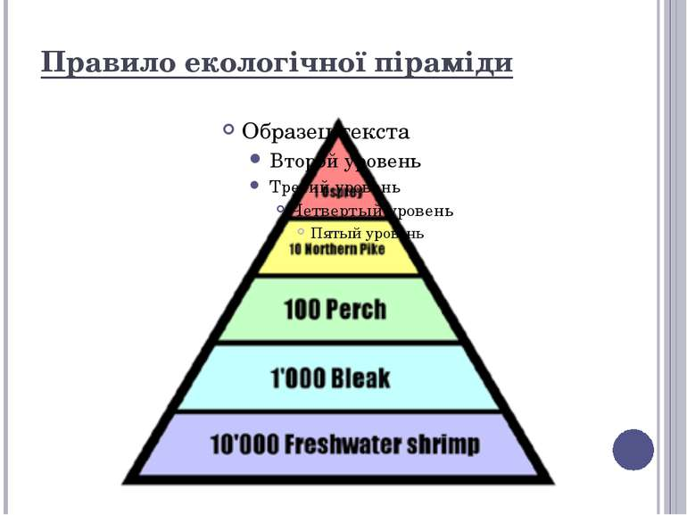 Правило екологічної піраміди