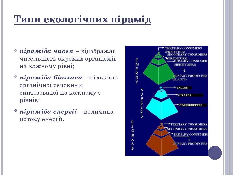 Типи екологічних пірамід піраміда чисел − відображає чисельність окремих орга...