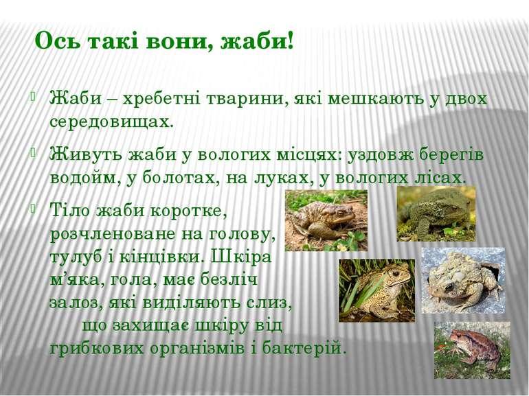 Ось такі вони, жаби! Жаби – хребетні тварини, які мешкають у двох середовищах...